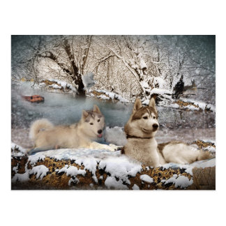 Siberian Husky Winter Wonderland Postcard