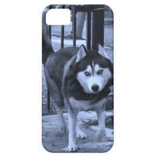 Siberian Husky Wolf Dog iPhone Case