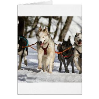 siberian husky working group card