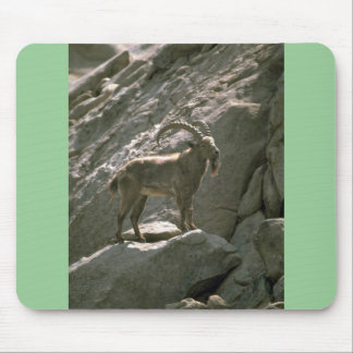 Siberian ibex mouse pad