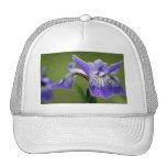 Siberian Iris Baseball Cap Mesh Hat