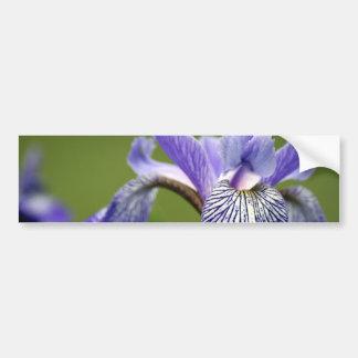 Siberian Iris Bumper Sticker Car Bumper Sticker