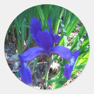 Siberian Iris Classic Round Sticker
