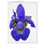 Siberian Iris Coordinating Items Card