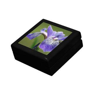Siberian Iris  Gift Box
