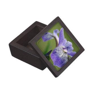 Siberian Iris Premium Gift Box
