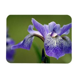 Siberian Iris  Premium Magnet Magnets