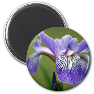 Siberian Iris Round Magnet Refrigerator Magnets