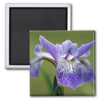 Siberian Iris Square Magnet Fridge Magnets