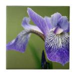 Siberian Iris  Trivet Ceramic Tile