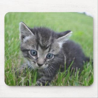 Siberian Kitten grass photograph Mouse Pad
