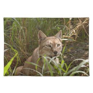 siberian lynx 004 cloth placemat