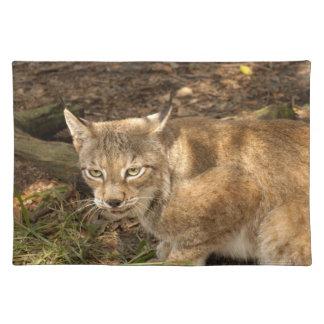 siberian lynx 006 placemat