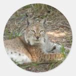siberian lynx 015 classic round sticker