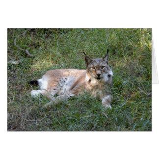 siberian lynx 028 card