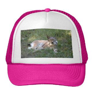 siberian lynx 028 trucker hat