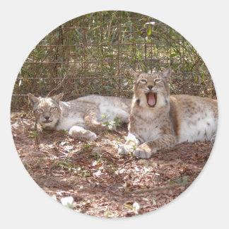 siberian lynx 037 classic round sticker