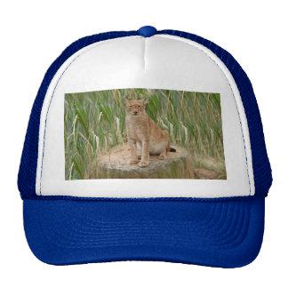 siberian lynx 040 trucker hat