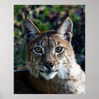 Siberian Lynx Profile Poster