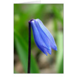 Siberian Squill Card