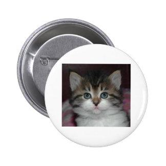 Siberian Tabby/White Kitten 2 Inch Round Button