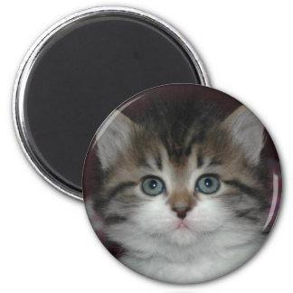 Siberian Tabby/White Kitten 2 Inch Round Magnet