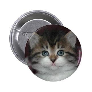 Siberian Tabby/White Kitten Buttons