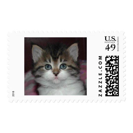 Siberian Tabby/White Kitten Postage