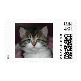 Siberian Tabby/White Kitten Postage Stamp