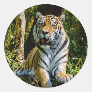 Siberian Tiger Amur Tiger Panthera Tigris Altaica Classic Round Sticker