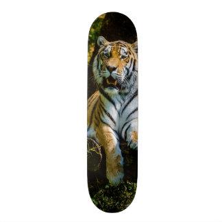 Siberian Tiger Amur Tiger Panthera Tigris Altaica Skateboard Deck