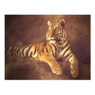 Siberian Tiger - Art Postcard Postcards
