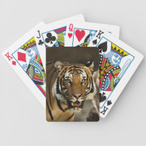 Siberian Tiger Bicycle Playing Cards