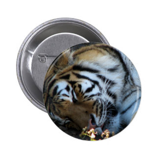 Siberian Tiger Button