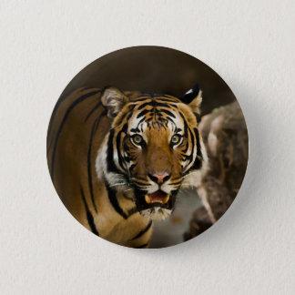 Siberian Tiger Button