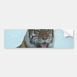Siberian Tiger Close Up Face 2 Bumper Sticker