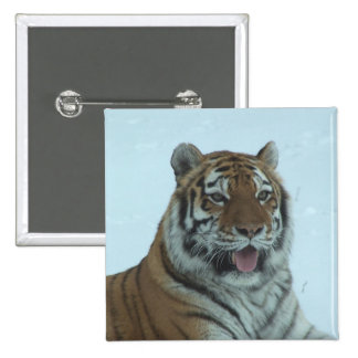 Siberian Tiger Close Up Face 2 Pinback Button