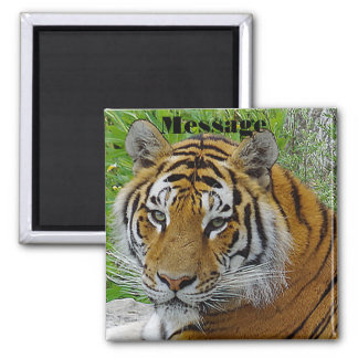 Siberian Tiger Closeup Photo of Face Magnet