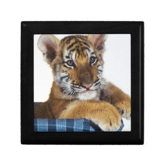 Siberian Tiger Cub in basket Gift Box