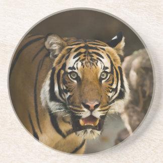 Siberian Tiger Drink Coaster