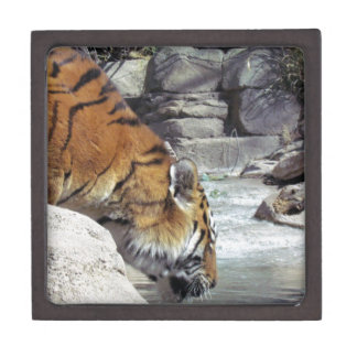 Siberian Tiger Drinking from a Stream Gift Box