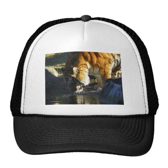 Siberian Tiger Drinking Trucker Hat