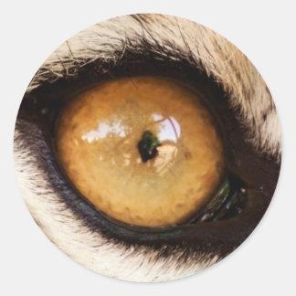 Siberian Tiger Eye - Sticker