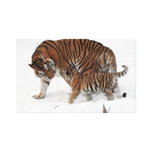 Siberian tiger family canvas print