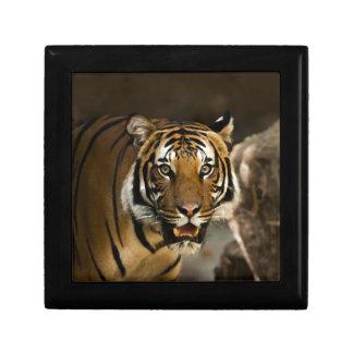 Siberian Tiger Gift Box