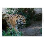 Siberian Tiger • Greeting Card