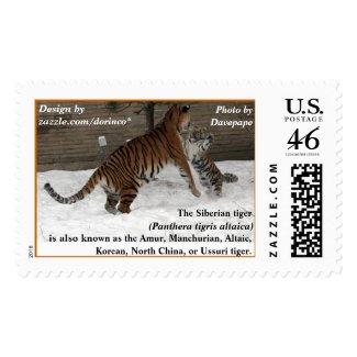 Siberian tiger hug postage stamps