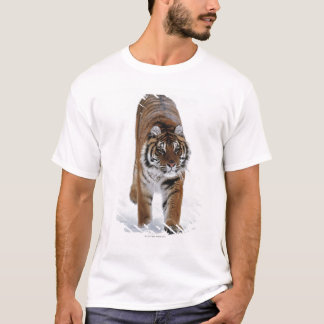 Siberian Tiger In Snow T-Shirt