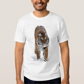 Siberian Tiger In Snow Tee Shirt