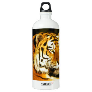 Siberian Tiger in the evening Aluminum Water Bottle